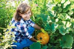 花匠用橙色南瓜在庭院里 免版税图库摄影