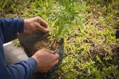 花匠种植的万寿菊 免版税库存照片