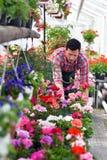 花匠自花店的温室工作 免版税库存图片