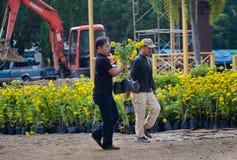花匠运载金盏草植物 图库摄影