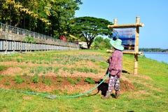 花匠-浇灌泰国农夫树  库存照片