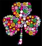 花卉三叶草 图库摄影