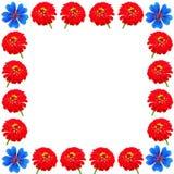 花卉五颜六色的样式背景集合 库存图片