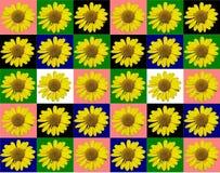 花卉五颜六色的样式背景 免版税库存照片