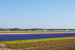 花卉五颜六色的领域 免版税库存照片