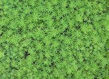 花卉地毯 免版税库存图片