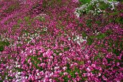 花卉地毯 库存图片