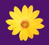 花卉场面 库存照片