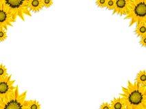 花卉墙纸 库存照片