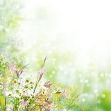 花卉复活节背景 图库摄影