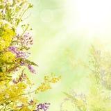 花卉复活节背景 免版税库存照片