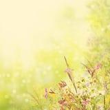 花卉复活节背景 库存图片
