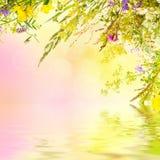 花卉复活节背景 免版税库存图片