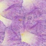 花卉嫩拼贴画由玫瑰花瓣和透明木纹理制成 剪贴薄的,坐垫,毯子样式和 图库摄影