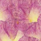 花卉嫩拼贴画由玫瑰花瓣和透明木纹理制成 剪贴薄的,坐垫,毯子样式和 库存照片