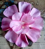 花卉帕特尔安排 免版税图库摄影