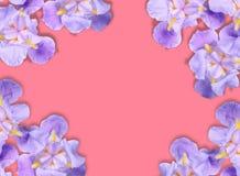 花卉平的被放置的样式贺卡 免版税库存照片
