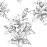 花卉开花的百合导航例证手拉的传染媒介例证现实剪影 向量例证