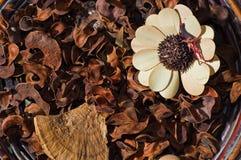 花卉排列秋天 库存照片