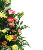 花卉排列 库存照片