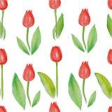 花卉无缝的样式郁金香(与绿色叶子的红色花) 库存图片