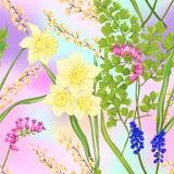 花卉无缝的样式,与春天的背景开花 皇族释放例证