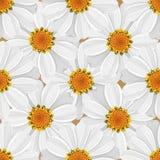 花卉无缝的样式-雏菊 库存照片
