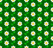 花卉无缝的模式 免版税库存照片