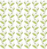 花卉无缝的纹理 绿色叶子和分支,在白色背景的稀薄的黑线 免版税库存图片