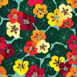 花卉无缝的背景。明亮的花纹花样。 库存例证