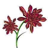 花卉明亮的永世树 库存照片