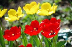 花卉春天美景 免版税库存照片