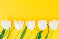 花卉构成由白色郁金香做成在黄色背景 平的位置,顶视图 可用的背景文件花卉框架向量 免版税库存照片