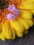 花卉构成 免版税库存图片