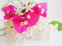 花卉柔软 免版税图库摄影
