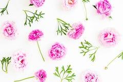 花卉样式有桃红色牡丹花和叶子白色背景 平的位置,顶视图 花纹理 免版税库存图片