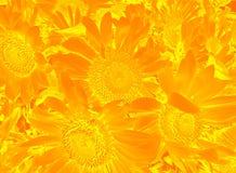 花卉样式用向日葵 免版税库存照片