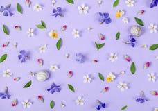 花卉样式由春天白色和紫罗兰色花、绿色叶子、桃红色芽和蜗牛壳做成在淡色淡紫色背景 库存图片