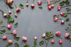 花卉样式由桃红色灌木玫瑰做成,绿色在灰色背景离开 平的位置,顶视图 背景s华伦泰 花卉patte 免版税图库摄影