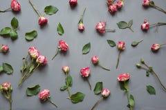 花卉样式由桃红色灌木玫瑰做成,绿色在灰色背景离开 平的位置,顶视图 背景s华伦泰 免版税库存照片