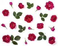 花卉样式由桃红色玫瑰花、芽和被隔绝的绿色叶子制成在白色背景 平的位置 免版税图库摄影