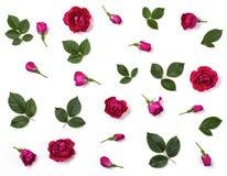 花卉样式由桃红色玫瑰花、芽和被隔绝的绿色叶子制成在白色背景 平的位置 免版税库存照片