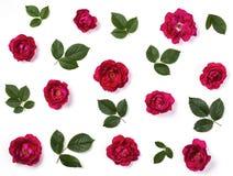 花卉样式由桃红色被隔绝的玫瑰花和绿色叶子制成在白色背景 平的位置 免版税图库摄影