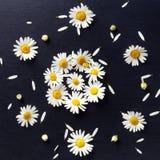 花卉样式被镶嵌在一个黑背景特写镜头的雏菊 开花顶视图 免版税库存图片