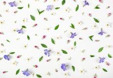 花卉样式被隔绝的由春天花、淡紫色野花、桃红色芽和叶子制成在白色背景 平的位置 免版税库存图片