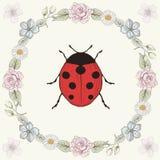花卉框架和瓢虫 库存图片