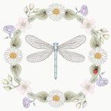 花卉框架和蜻蜓葡萄酒板刻样式 库存图片