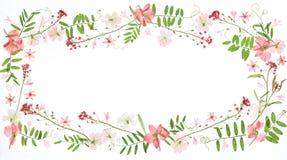 花卉框架构成系列 免版税库存图片