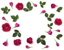 花卉框架由桃红色玫瑰制成开花,发芽和在白色背景隔绝的叶子 平的位置 库存照片