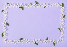 花卉框架由白色春天花和绿色叶子制成在淡色淡紫色背景 平的位置 库存图片